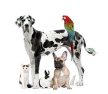 Blessing of the Animals, Saturday, October 5, 10:00 AM