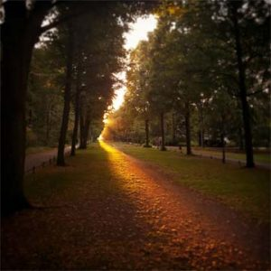 Image of a sunlit path